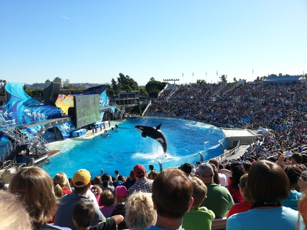 Orca leaping at SeaWorld