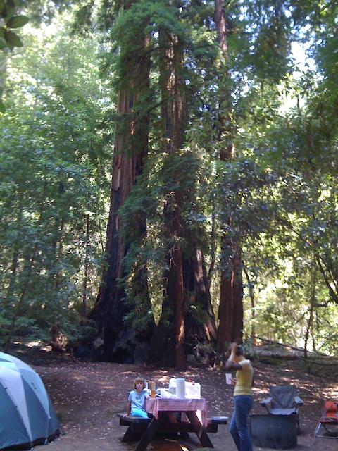 Big Basin camping